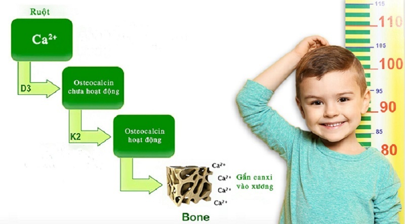 """MK7 trong cơ thể sẽ kích hoạt tối đa Osteocalcin chuyển sang dạng hoạt động để chúng thực hiện nhiệm vụ """"dẫn đường"""" canxi đến đúng vị trí cần đến tại xương, thúc đẩy quá trình tạo xương diễn ra mạnh mẽ để trẻ có hệ xương chắc khỏe và tăng chiều cao tối ưu."""