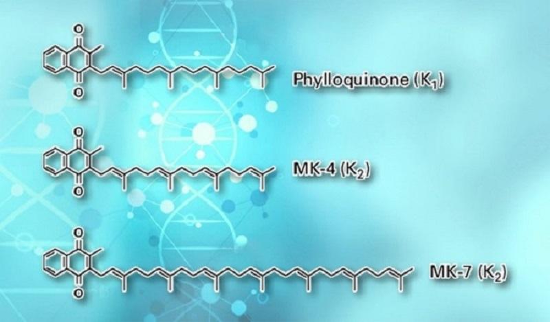 Thời gian bán hủy dài cho phép MK7 lưu trữ trong máu với hàm lượng cao hơn và tác động tới nhiều mô cơ quan khác nhau ngoài gan để thực hiện các chức năng đối với xương, tim mạch…
