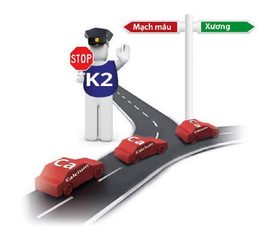 vitamin k2 tăng cường gắn canxi vào xương